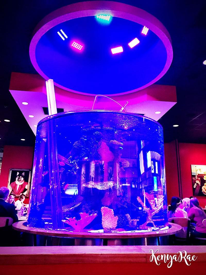 cowfish fish tank
