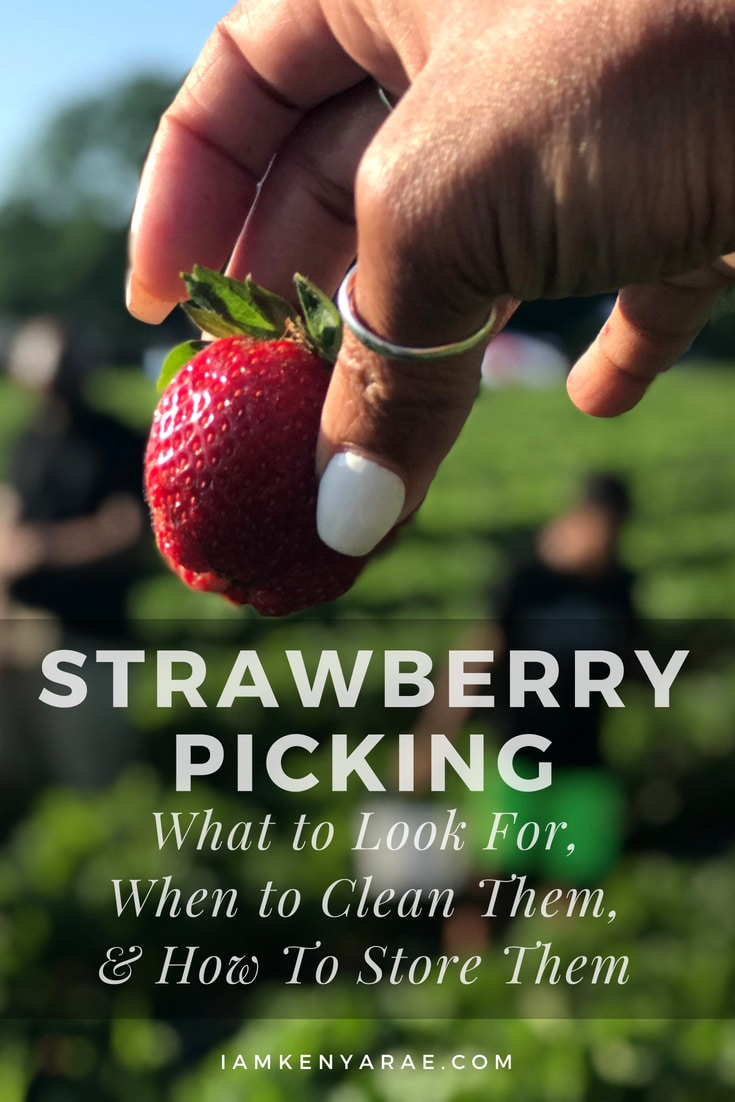 Strawberry Picking | What To Look For + How To Clean & Store Strawberry picking is a great family fun activity in the springtime.  And if you are not sure what to do with the berries after, here you go!