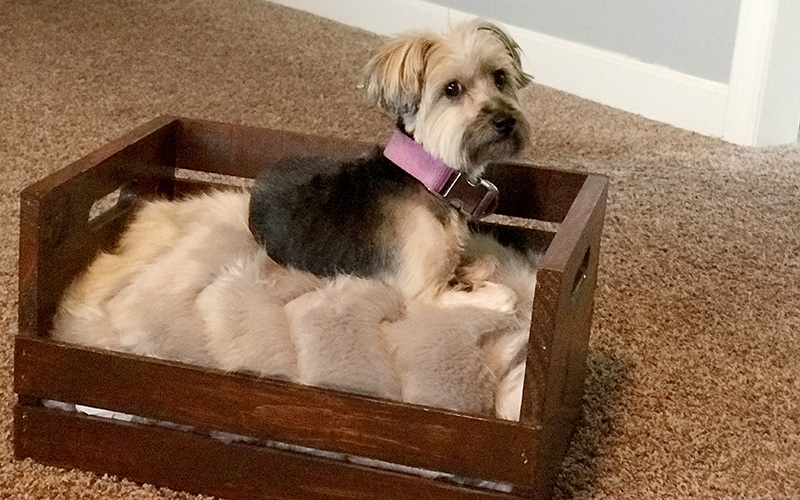 yorkie dog in wood dog bed