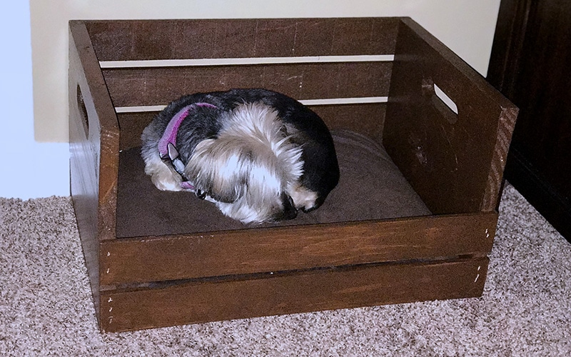 diy dog bed with flat pillow