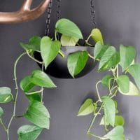 Upcycled Thrift Store Bowl Hanging Planter // DIY Hanging Planter