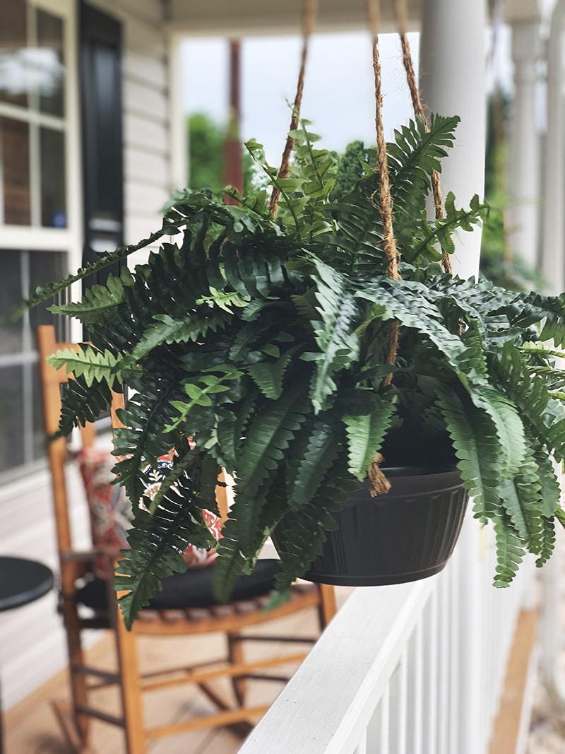 hanging fake boston fern