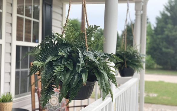 fake ferns on the front porch